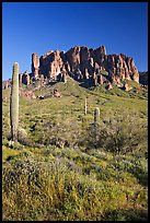 Tall cacti and Superstition Mountains, Lost Dutchman State Park, afternoon. Arizona, USA