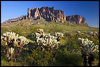 Cholla cacti and Superstition Mountains, Lost Dutchman State Park, afternoon. Arizona, USA
