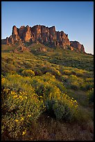 Craggy Superstition Mountains and wildflowers, Lost Dutchman State Park, sunset. Arizona, USA