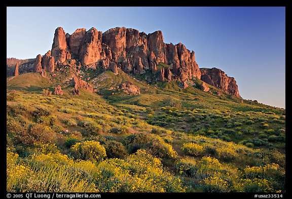 Wildflowers and  Superstition Mountains, Lost Dutchman State Park, sunset. Arizona, USA