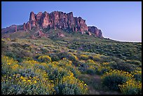 Craggy Superstition Mountains and brittlebush, Lost Dutchman State Park, dusk. Arizona, USA
