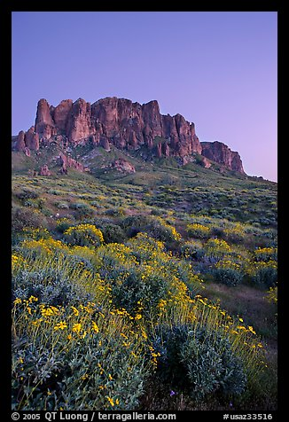 Superstition Mountains and brittlebush, Lost Dutchman State Park, dusk. Arizona, USA (color)
