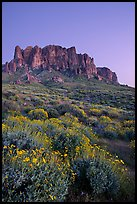 Superstition Mountains and brittlebush, Lost Dutchman State Park, dusk. Arizona, USA