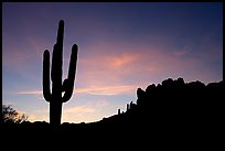 Saguaro cactus and Superstition Mountains silhoueted at sunrise, Lost Dutchman State Park. Arizona, USA