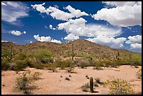 Desert landscape, Sonoran Desert National Monument. Arizona, USA (color)