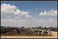 Cattle feedlot, Maricopa. Arizona, USA (color)