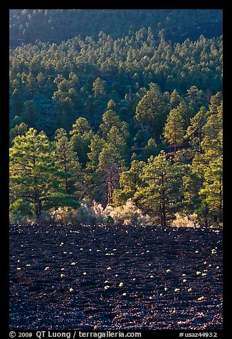 Cinder and forest, Sunset Crater Volcano National Monument. Arizona, USA