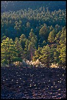 Cinder and forest, Sunset Crater Volcano National Monument. Arizona, USA (color)