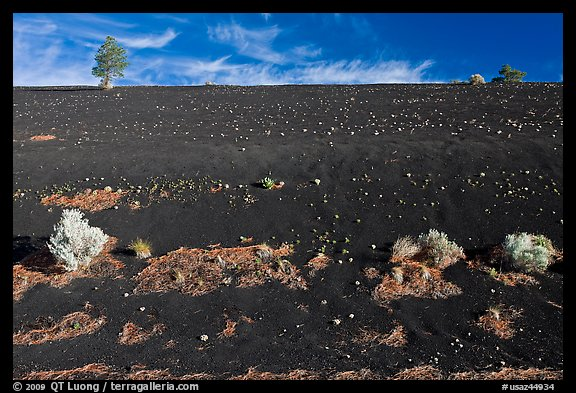 Sparse vegetation on cinder slope, Sunset Crater Volcano National Monument. Arizona, USA (color)