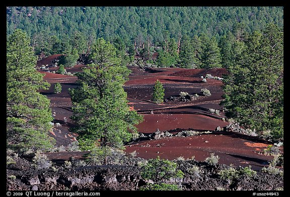 Pine trees, hardened lava, and red cinder, Sunset Crater Volcano National Monument. Arizona, USA (color)