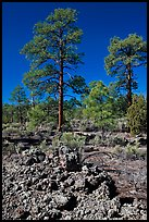 Hardened lava and pine trees, Coconino National Forest. Arizona, USA