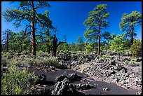 Kana-a lava flow, Coconino National Forest. Arizona, USA