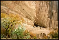 White House Ancestral Pueblan ruins with trees in fall colors. Canyon de Chelly  National Monument, Arizona, USA