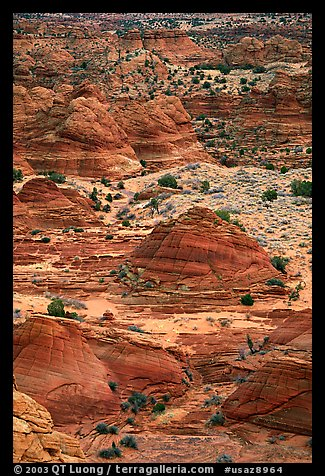 Sandstone mounds. Coyote Buttes, Vermilion cliffs National Monument, Arizona, USA (color)