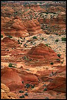 Sandstone mounds. Coyote Buttes, Vermilion cliffs National Monument, Arizona, USA ( color)