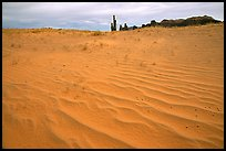 Pink sand and Yei bi Chei. Monument Valley Tribal Park, Navajo Nation, Arizona and Utah, USA