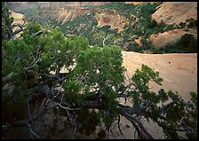 Monument Canyon view, Colorado National Monument. Colorado National Monument, Colorado, USA (color)