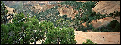Mesa landscape. Colorado National Monument, Colorado, USA (Panoramic color)