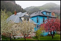 Flowering trees and houses. Telluride, Colorado, USA ( color)