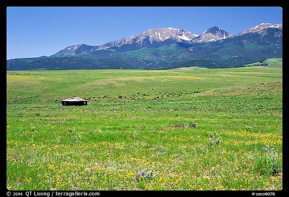 Meadow, Sangre de Cristo range. Colorado, USA (color)