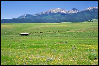 Meadow, Sangre de Cristo range. Colorado, USA