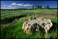 Petrified stump, Florissant Fossil Beds National Monument. Colorado, USA