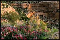 Indian Paintbrush and sandstone cliffs. Colorado National Monument, Colorado, USA