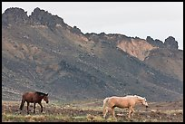 Wild horses. Shiprock, New Mexico, USA (color)