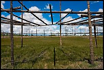 Drying rack in field. Taos, New Mexico, USA (color)