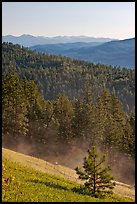 Slope with meadow and forest, Carson National Forest. New Mexico, USA (color)