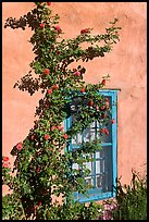 Roses, adobe wall, and blue window. Santa Fe, New Mexico, USA