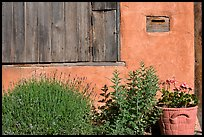 Flowers, mailbox, and weathered window. Santa Fe, New Mexico, USA ( color)