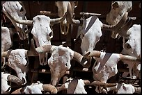 Cow skulls for sale. Santa Fe, New Mexico, USA ( color)