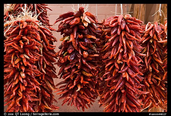 Ristras for sale. Santa Fe, New Mexico, USA (color)