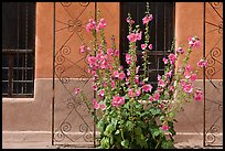 Flowers and wall, Church San Felipe de Neri. Albuquerque, New Mexico, USA