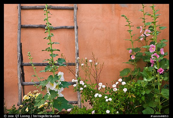 Flowers, ladder, and adobe wall. Albuquerque, New Mexico, USA