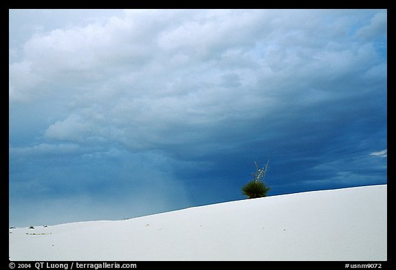 Lone Yucca. White Sands National Monument, New Mexico, USA (color)