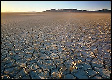 Peeling dried mud, sunrise, Black Rock Desert. Nevada, USA