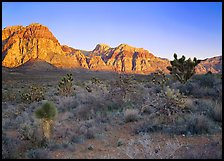 Yuccas and rock walls at sunrise, Red Rock Canyon. Red Rock Canyon, Nevada, USA
