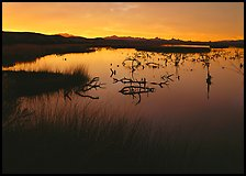 Wetlands at sunrise, Havasu National Wildlife Refuge. Nevada, USA ( color)