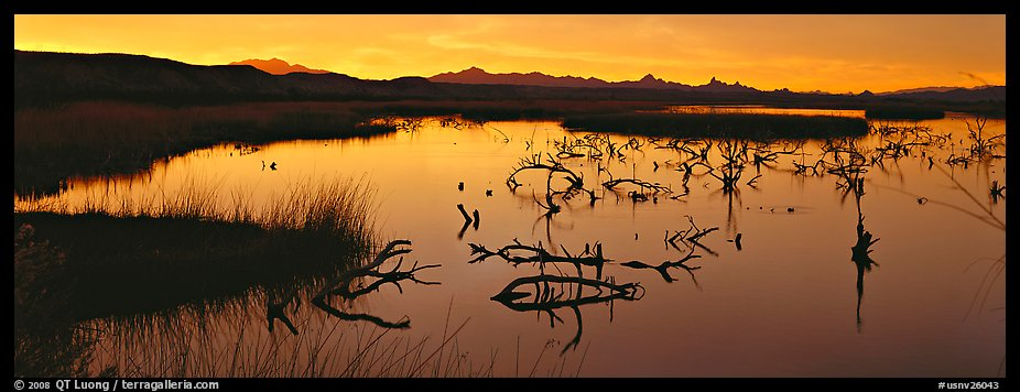 Wetland scenery at sunrise. Nevada, USA