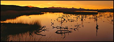 Wetland scenery at sunrise. Nevada, USA (Panoramic color)