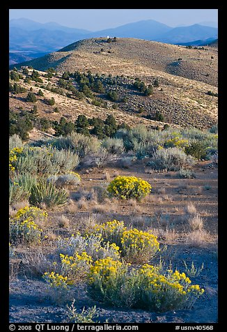 Sagebrush and hills, Virginia City, Nevada. Virginia City, Nevada, USA