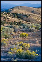 Sagebrush and hills, Virginia City, Nevada. Virginia City, Nevada, USA ( color)