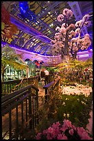 Botanical garden and conservatory with purple light, Bellagio Casino. Las Vegas, Nevada, USA