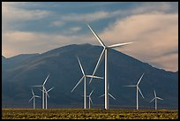 Electricity-generating windmills. Nevada, USA ( color)