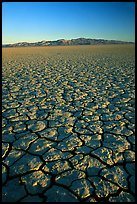 Dry Lakebed  with cracked dried mud, sunrise, Black Rock Desert. Nevada, USA ( color)