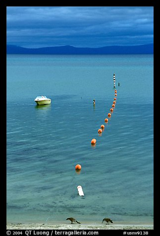 Two birds, buoy line and boat, South Lake Tahoe, California. USA