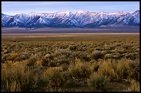 Sagebrush and mountain range. Nevada, USA (color)