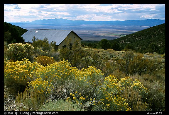Sage in bloom and cabin, Snake Range. Nevada, USA (color)